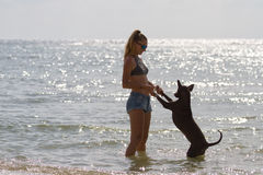 The girl beautiful in jeans shorts and an undershirt also gatsya with dogs, game with dogs on the beach. The girl beautiful in jeans shorts and an undershirt Stock Images