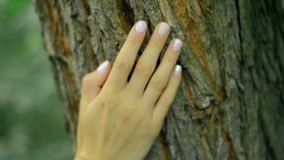 Girl with beautiful manicure touch tree bark in the forest. Close up of girl with beautiful manicure touch tree bark in the forest stock video footage
