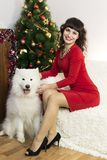 The girl with the big dog at the festive tree. Girl in red brunette dress and white dog meet Christmas at the Christmas tree Royalty Free Stock Photo