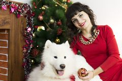 The girl with the big dog at the festive tree. Girl in red brunette dress and white dog meet Christmas at the Christmas tree Stock Photos