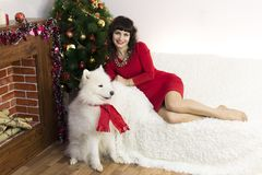 The girl with the big dog at the festive tree. Girl in red brunette dress and white dog meet Christmas at the Christmas tree Royalty Free Stock Photos