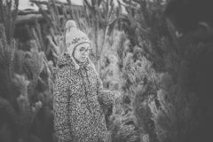 Girl with big glasses and gray and purple hat looking at green christmas tree. Black and white royalty free stock photography