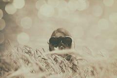 Girl with binocular at wheat field. Stock Image