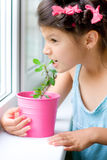 Girl bites houseplant Stock Images