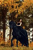 Girl in a black dress and a black tiara on a Frisian horse ride on a magical fairytale forest. A girl in a black dress and a black tiara on a Frisian horse ride Royalty Free Stock Images