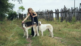 Girl in black dress with two Russian greyhounds. Girl in green dress with two Russian greyhounds 1 stock video footage