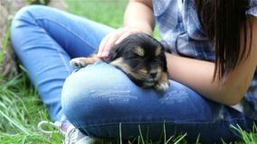 Girl with black puppy. stock footage