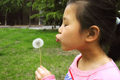 Girl blow Dandelion Stock Images