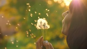 Girl Blow on a Dandelion. Woman blowing dandelion seeds at sunset stock video