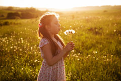 Girl blowing a bouquet of dandelions Royalty Free Stock Images