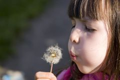 Girl Blowing Dandelion Stock Photos