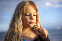 Girl blowing dandelion. A cute little girl blowing a daisy flower at the beach stock photo