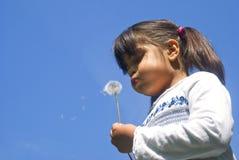 Girl blowing dandelion Stock Photos