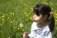 Girl blowing dandelion. Little girl blowing dandelion on the meadow Stock Photos