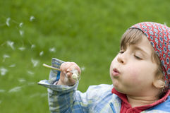 Girl blowing dandelion stock images