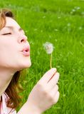 Girl blowing on the dandelion Royalty Free Stock Photo