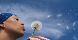 Girl blowing a dandelion. Young Girl blowing a dandelion Royalty Free Stock Image