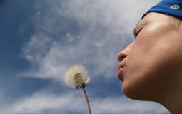 Girl blowing a dandelion. Girl blowing dandelion seeds Royalty Free Stock Photography