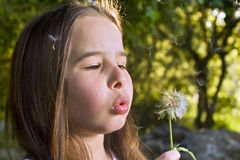 Girl blowing a dandelion. Little girl blowing a dandelion in the woods Stock Images