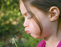 Girl blowing a dandelion. Close up on a little girl blowing a dandelion in the woods Royalty Free Stock Photos