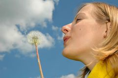 Girl blowing dandelion.  Royalty Free Stock Images