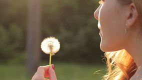 Girl blowing on dandelion. Close-up of young girl blowing on dandelion in sunlight stock footage