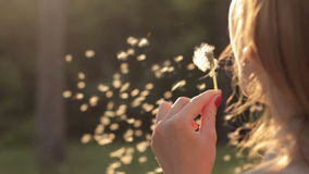 Girl blowing on dandelion. Close-up of young girl blowing on dandelion in sunlight stock video footage