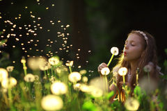 Girl blowing on a dandelion flower Royalty Free Stock Photos