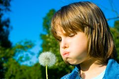 Girl blowing dandelion on the meadow Royalty Free Stock Image
