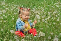 Girl blowing dandelion outdoors in spring field stock photo