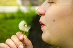 Girl blowing dandelion seeds, closeup royalty free stock image