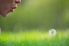 A girl blowing on a dandelion Stock Image