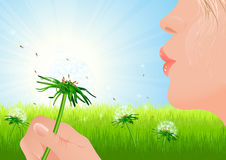 Girl blowing dandelion on summer field Stock Image