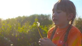 Girl blowing on a dandelion in the sun in a spring park at sunset. Girl blowing on a dandelion in the sun in a spring park at sunset stock video footage