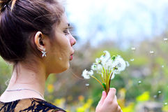 Girl blowing on many dandelions Royalty Free Stock Image