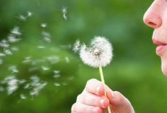 Girl Blowing On Dandelion Stock Images