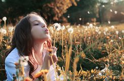 Girl blowing seeds from a flower dandelion in the autumn. Afternoonr Stock Images