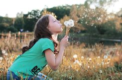 Girl blowing seeds from a flower dandelion in the autumn. Afternoonr Stock Photography