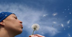 Girl blowing seeds out of a dandelion. In bly spring day Stock Images