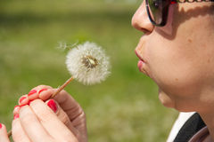 Girl blowing on white dandelion Royalty Free Stock Images