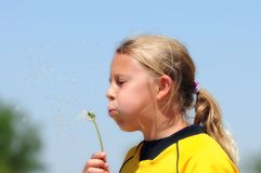 Girl Blows Dandelion Seeds. In Wind Stock Photo