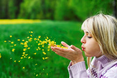 The girl blows off flower petals. The young woman blows off yellow petals of a flower from palms against field and wood Stock Images