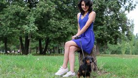 Girl in blue dress is sitting on the stump with dachshund dog in park. stock video