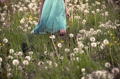 Girl  in blue dress in spring field. Part of Girl  in blue dress in spring field with dandelions, sepia effect Royalty Free Stock Images