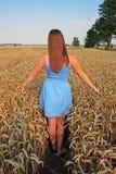 Girl in blue dress walking on wheat field Royalty Free Stock Image
