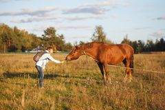 The girl in the blue jacket feeds the red horse in the field stock photo