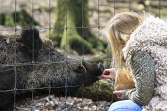 The girl and the boar Royalty Free Stock Photo