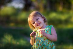 The girl with a bouquet of camomiles in the summer. The smiling girl with a bouquet of camomiles in the summer Royalty Free Stock Image