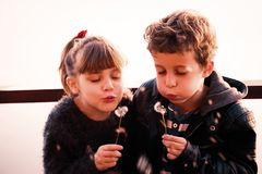 Girl and boy  blowing on a dandelion. Little cute girl and boy  blowing on a dandelion. Copy space. Selective focus and small depth of field Stock Images