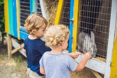Girl and boy are fed rabbits in the petting zoo stock photos